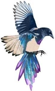 Magpie-Med-6x4cm